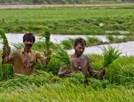 Sindh govt launches numerous programmes for agriculture developme ..