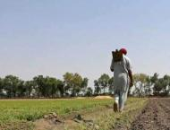 'Kissan Platforms' to be set up in Sialkot