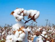 Spot rates of cotton (Crop 2019-20)