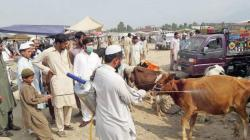 Kisaan market inaugurated in Mardan