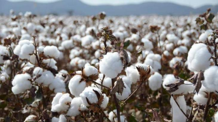 Strategy being devised for better cotton production next year: secretary