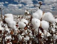 Spot rates of cotton (Crop 2019-20) 13 Dec 2019