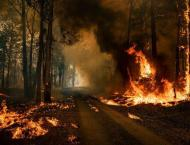 Australia's Bushfires Very Likely Sparked by Global Warming Despi ..