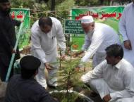 Secretary Forest launches spring plantation campaign in Kohat Div ..