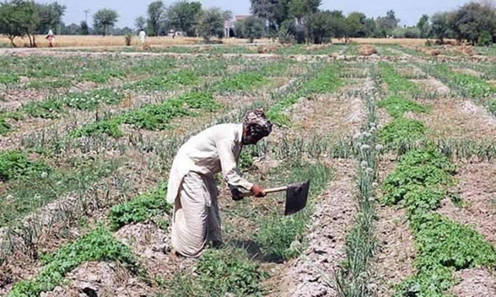 Strong liaison to help in solving problems of farmers