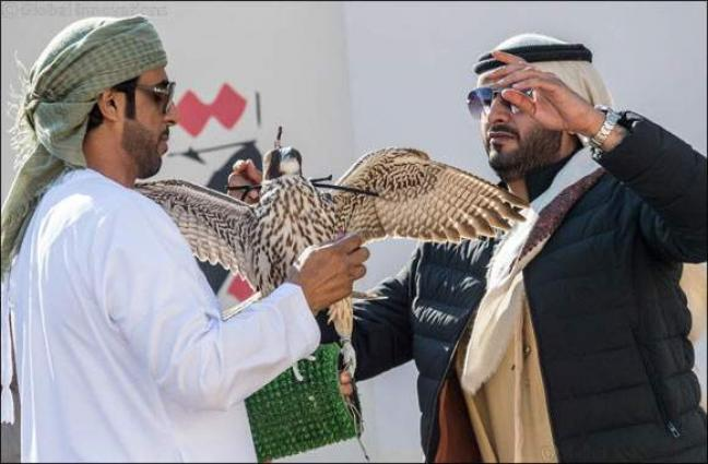 UAE Falconers League kick starts competition in Dubai