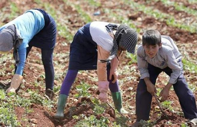 New Lebanese agriculture minister vows to restore ties with Syria, boost export