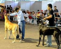 Parks and Horticulture Authority (PHA) to organize dog show