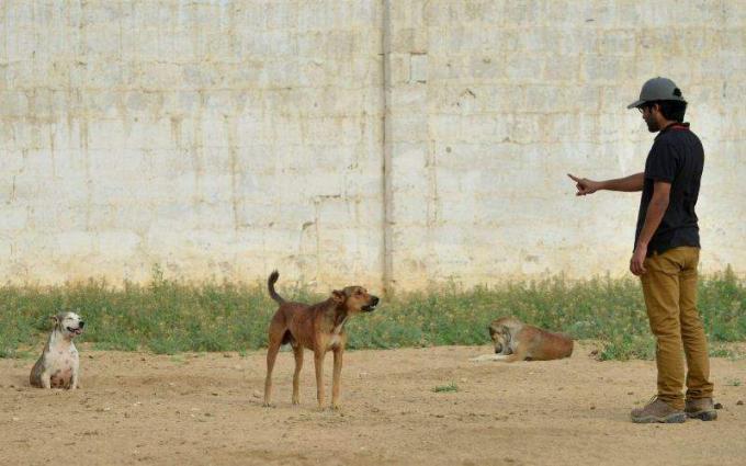 Child dies of dog biting in Multan