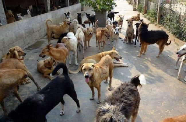 Campaign launched against stray dogs in Sukkur