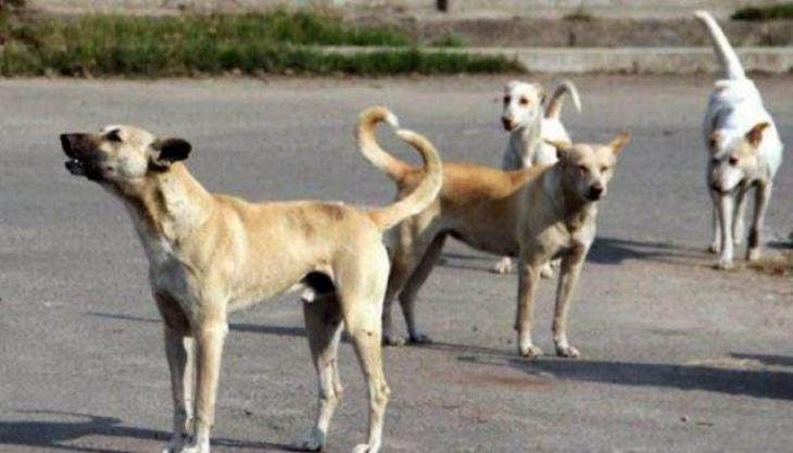 Anti-stray dog cell sets up in Malir