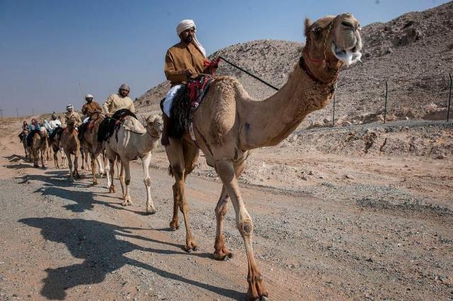 Hamdan bin Mohammed witnesses Camel Trek Marathon in Dubai