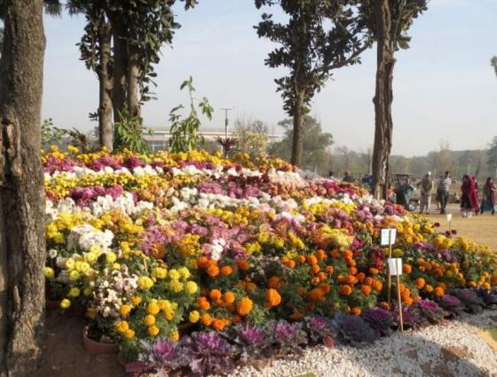 Arrangements continues for flowers' exhibition: Vice Chairman Parks and Horticulture Authority (PHA) Muhammad Iqbal Safi