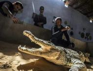Egypt's Nubians tame crocodiles for selfie-snapping tourists