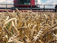180797 metric tonnes wheat to be procured in Rajanpur