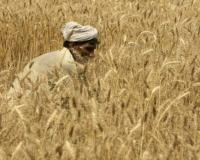Pb govt offering Rs 49 bln interest-free loans for farmers