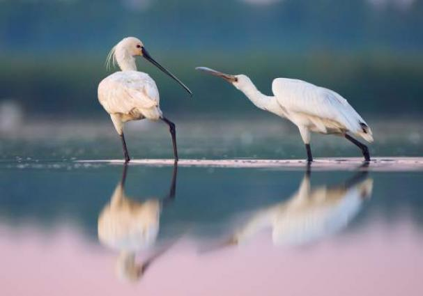 Over 115,000 birds winter in China's second-largest freshwater lake