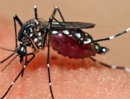 Plan devised for dengue control: commissioner