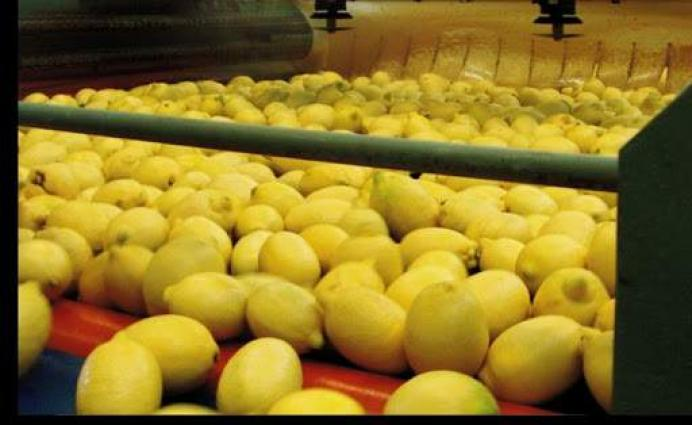 Turkey subjects lemon to export control amid COVID-19