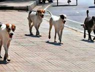 Get cash over catching stray dogs, Livestock Deptt offers reward  ..