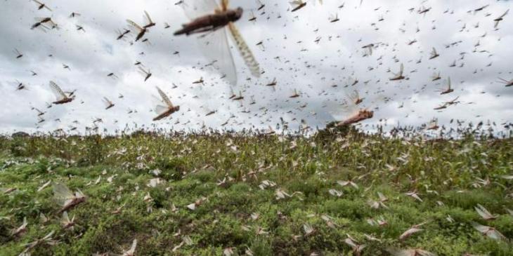 Punjab govt taking effective measures against locusts: SMBR