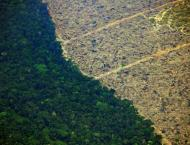 Football pitch of rainforest destroyed every six seconds