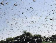 Anti-locust operation completed over 5,202 sqm