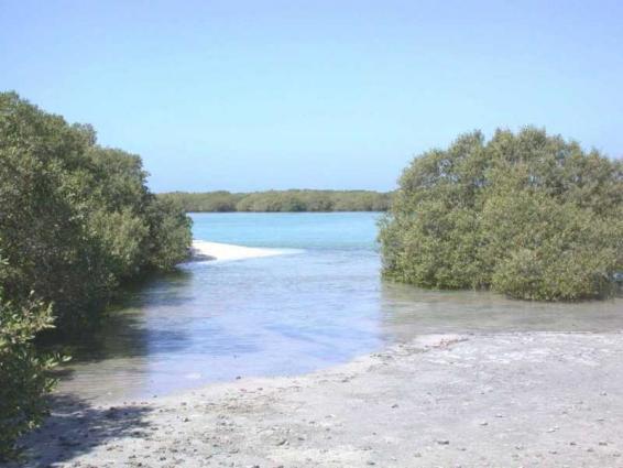 هيئة البيئة - أبوظبي .. جهود استثنائية لحماية التنوع البيولوجي محليا ودوليا
