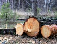10 involved in illicit cutting of trees arrested