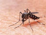Anti-dengue surveillance teams mobilized