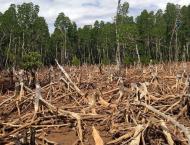 Deforestation decreased but still remains a concern: UN report