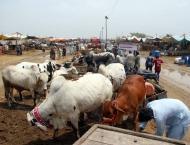 Implementation of smart lockdown, arrangements at cattle markets  ..