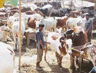 Minister visits cattle markets, inspects vaccination, other facil ..