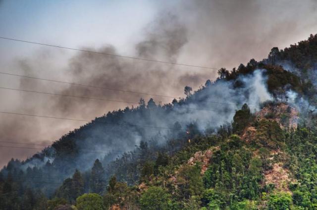 Heavy rain extinguishes jungle fire on Shimla hills