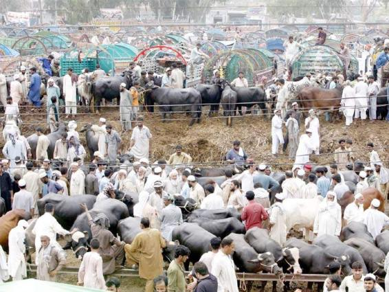 Implementation of SOPs must be ensured in cattle market amid of COVID-19: DC Gwadar