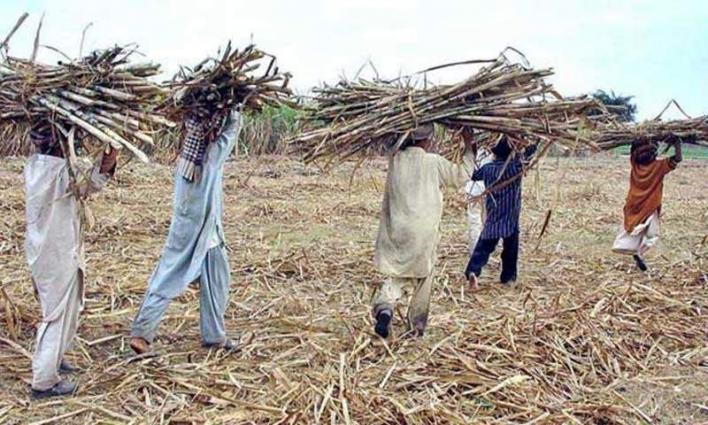 Anger of filing case : outlaws allegedly kill grower
