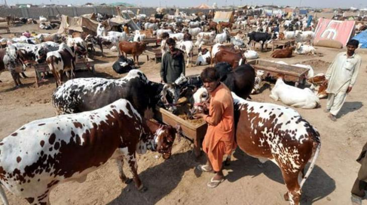 PCJCCI Suggests Digital Market for buying and selling of Cattle