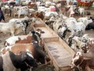 Cattle traders deprived of Rs 2.57 million