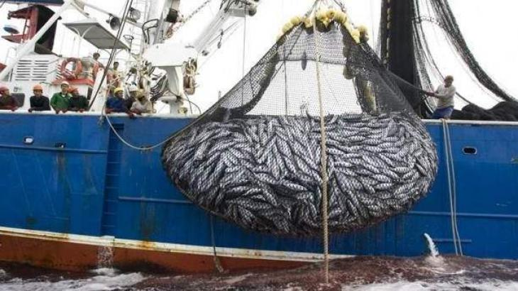 Efforts underway to bring innovation in deep-water fishing industry: Maritime Affairs