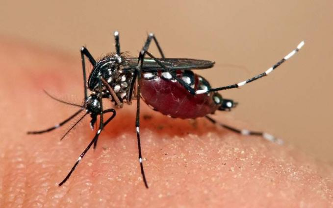 One more Dengue case reported in Punjab on Friday