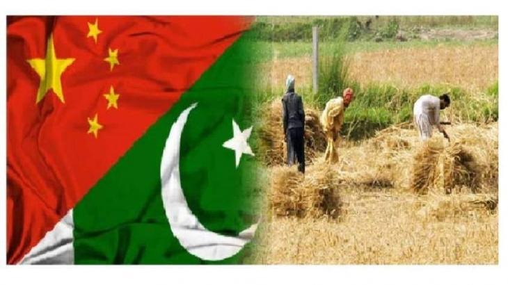 China to assist Pakistan in developing dates processing plants, onion cold storages in Southern Balochistan