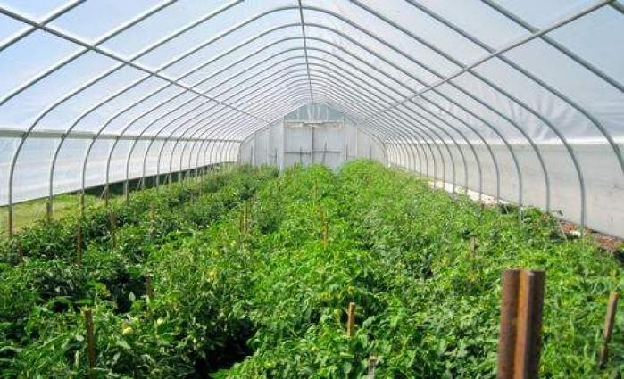 Experts advises tunnel cultivation for summer vegetable should start in Oct
