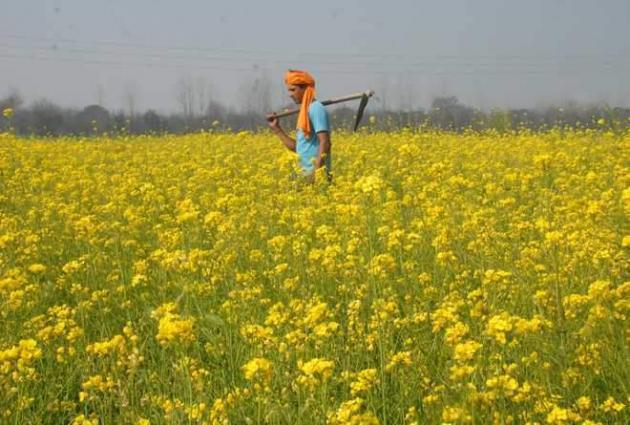 Experts for staring canola cultivation