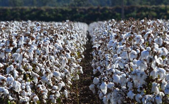 Spot rates of cotton (Crop 2020- 21)