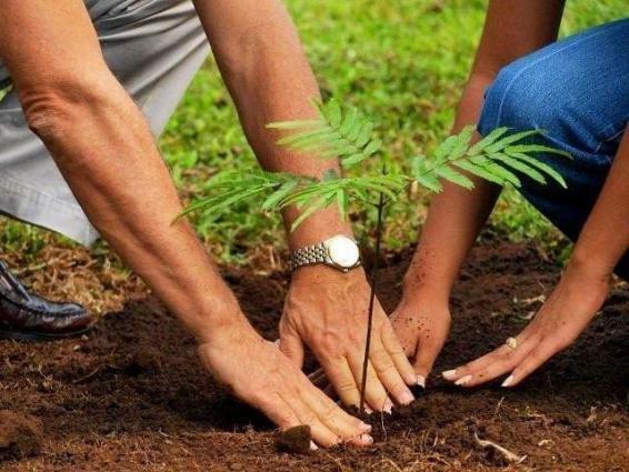 Tree plantation campaign full swing