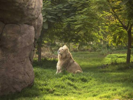 Dubai Safari Park to welcome visitors from 5th October