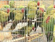Wildlife department rescues dozens of smuggled parrots