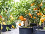 Secretary orders survey, registration of fruit plant nurseries