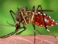 Minister orders emergency measures against dengue