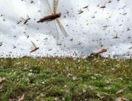 Locust presence not reported in country during last 24 hours: NLC ..